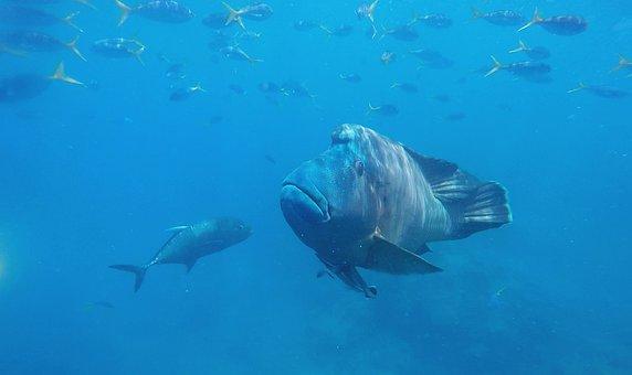 Fish, Underwater, Water, Ocean, Sea, Wildlife, Coral