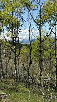 Alberta Foothills, Mountains, Landscape, Canada