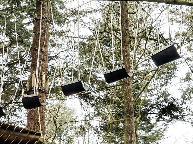Climbing Forest, High, Trees, Upward, Crown