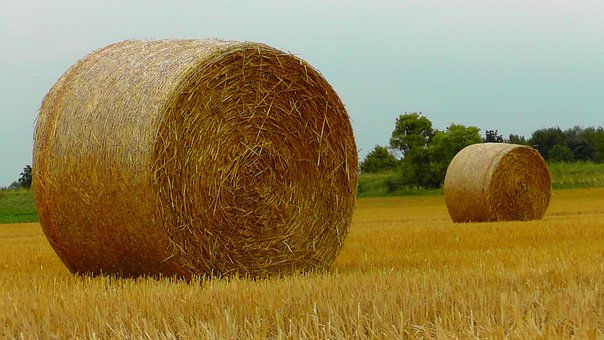Straw Bales, Straw, Harvest, Food, Cereals, Stock