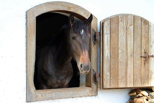 Horse, Head, Horse Head, Portrait, Barn Door