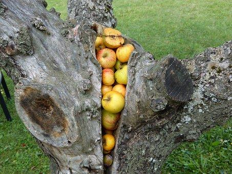 Tribe, Tree, Apple, Stock, Gap, Food, Fruit, Apple Tree