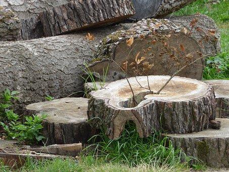 Konar, Trunk, Wood, Tree, Cut, The Bark, Tree Bough