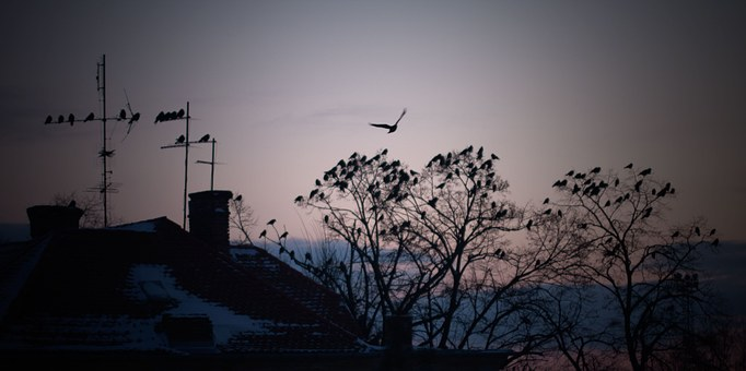 Winter, Bird, Roof, Nature, Season, Tree, December