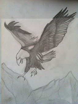 Eagle, Charcoal Drawing, Pencil Drawing, Drawing
