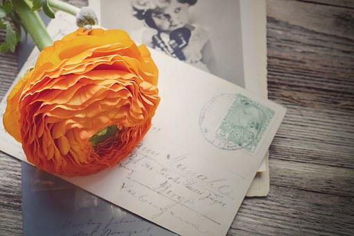 Ranunculus, Flower, Blossom, Bloom, Petals, Orange