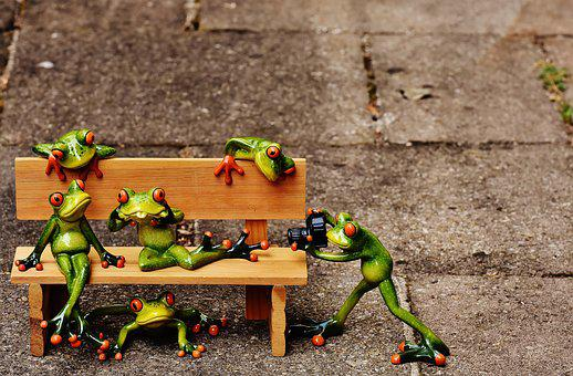 Frogs, Sociable, Bank, Bench, Relaxed, Fig, Funny, Rest