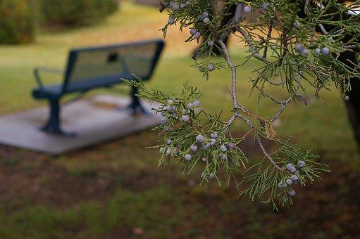 Bench, Park, Park Bench, Grass, Green, Summer, Nature