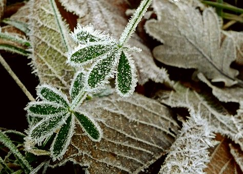 Fall Foliage, Frost, Hoarfrost, Leaf, Crystal Formation