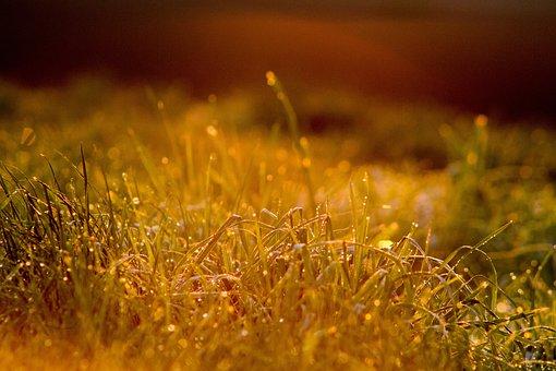 Morning, Dew, Morgentau, 6 00, Beginning Of Summer