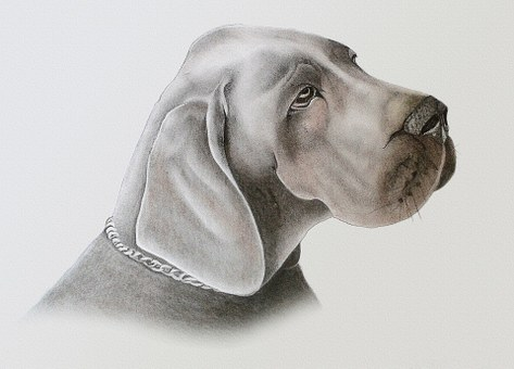 Dog, Drawing, Painting, Pastel, Paint, Animal