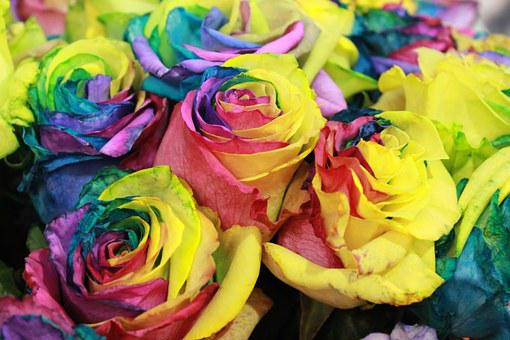 Rose, Flowers, Nature, Rainbow Rose, Gold Rose