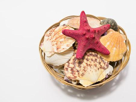 Shell, Sea, Sea Shell, Star, Sea Star, Starfish, Animal