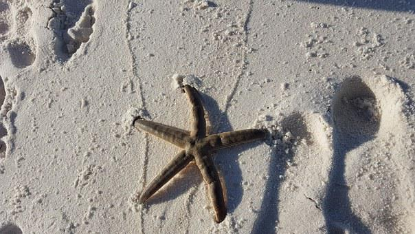 Starfish, Ocean, Sea, Water, Summer, Nature, Beach