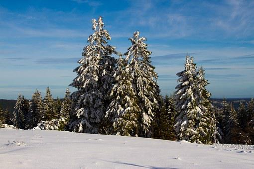 Winter, Snow, Christmas Tree, Wintry, White, Cold