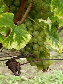 Dordogne, Bergerac, Vines, Montbazillac