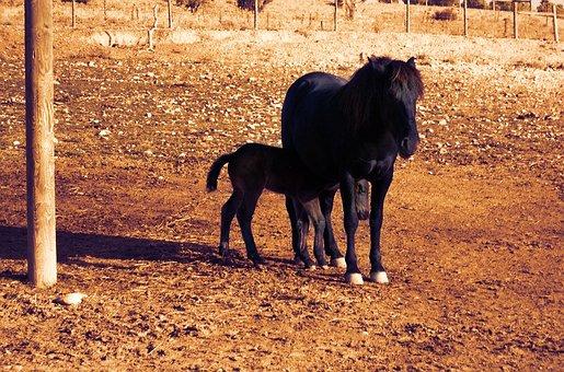 Animal World, Horses, Black, Female, Colt