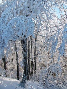 Forest, Landscape, Nature, Winter, View, Snow, Poland