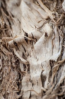 Tree, Texture, Wood, Paper, Strips, Art, Artsy, Nature