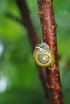 Snail, Animal, Plant, Stem, Sticky, Mollusk, Spiral