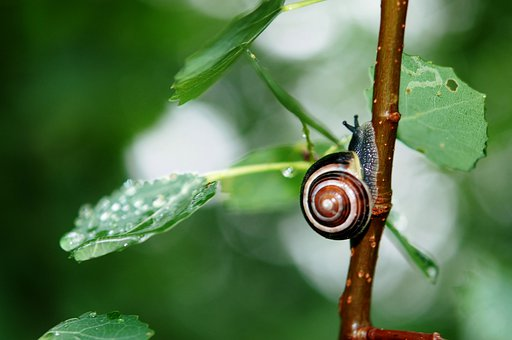 Snail, Animal, Leaves, Nature, Sticky, Crawling