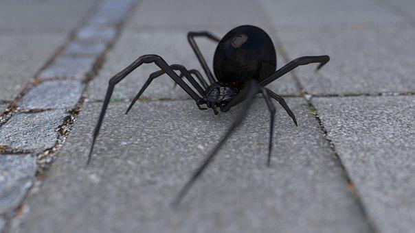 Arachnophobia, Spider, Widow, Black Widow