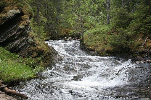 Brook, Forest, Slow Shutter Speed, Jämtland, Sweden