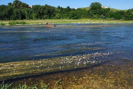 Danube, River, Water, Nature, Germany, Flowers