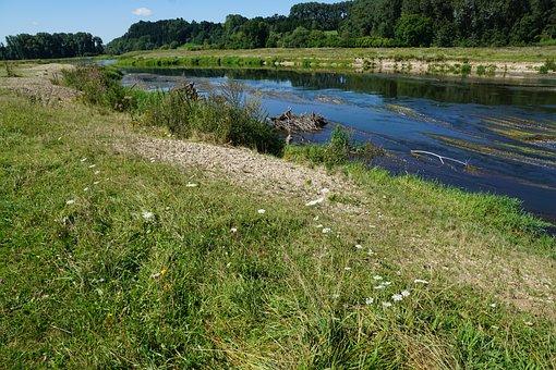 Danube, River, Water, Riedlingen, Flowers, Plant