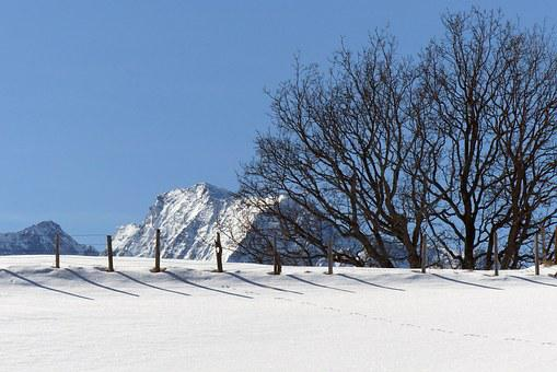 Grove Of Trees, Fence, Mountains, High Tauern, Winter