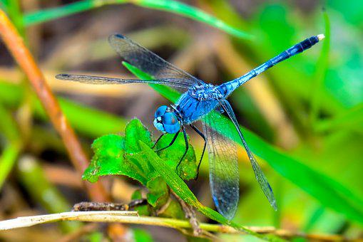 Dragonfly, Insect, Black, Blue, Eyes, Green, Legs