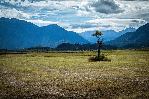 Tree, Lonely, Moor, Moss, Murnau Moor, Loneliness