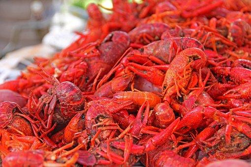 Crawfish, Mud Bugs, South, Louisiana, New Orleans, Food