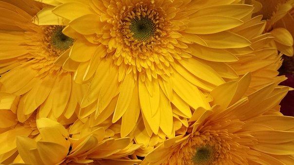 Flower, Design, Floral, Texture, Romantic, Pattern