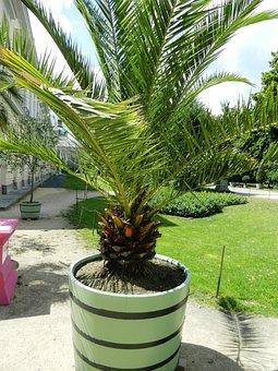 Plant, Bowl, Potted, Exotica, Park, Vegetation, Nature