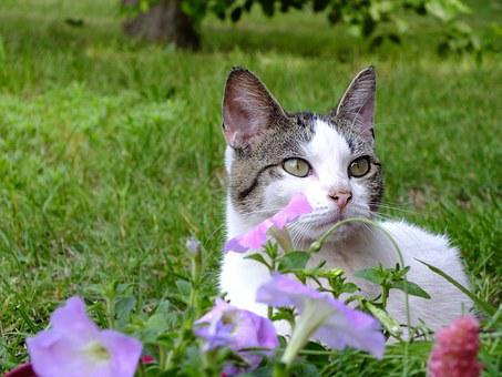 White, Cat, Kitty, Kitten, Blaze, Garden, Purple, Lilac