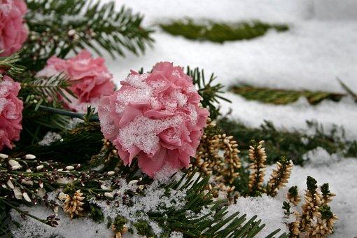 Cemetery Flowers, Rose, Cemetery, Flower, Plant, Nature