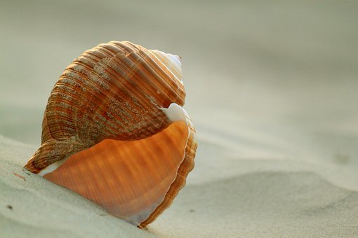 Shell, Snail, Snail Shell, Sand, Sand Beach, Holiday
