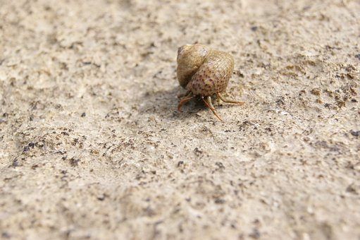 Hermit Crab, Shell, Snail, Sea, Nature, Animals, Water