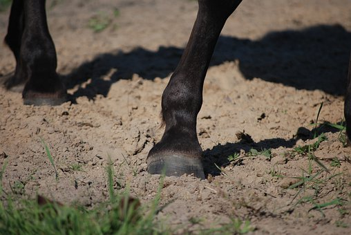 Hoof, Galop, The Horse, Horses, Konisko, Konik, Hooves