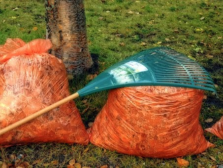 Autumn, Fall, Rake, Leaves, Garden, Tool, Orange Bag