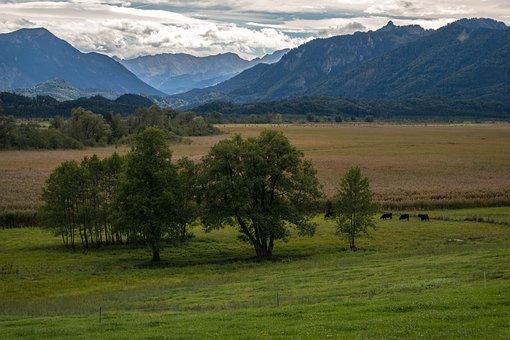 Trees, Mountains, Moor, Moss, Murnau Moor, Wide