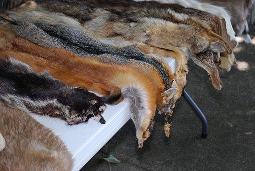 Animal Skins, Wildlife, Leather, Fur, Skin, Fox Skin