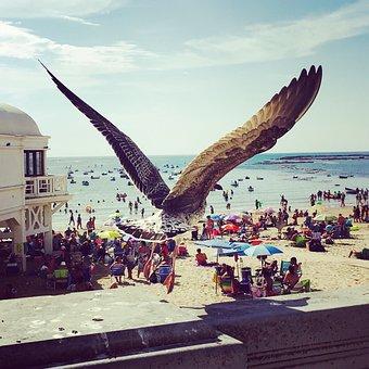 Seagull, Bird, Cadiz, Beach, Summer, Wings, Flight