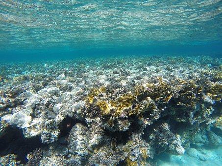 Water, Coral, Underwater, Sea, Reef, Diving