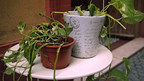 Plants, Outdoor, Garden, Spain, Entrance, Pots, Nature