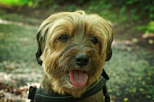 Portrait, Dog, Face, Pet, Comrade, Cute, Dog Look