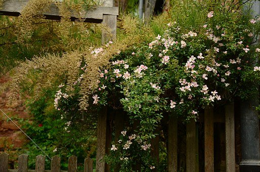 Garden, Garden Fence, Heck Roses, Overgrown, Fence