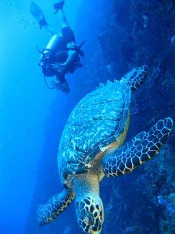 Turtle, Underwater, Marine, Fish, Ocean, Coral, Nature