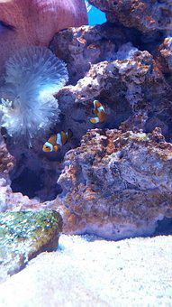 Aquarium, Fish, Nemo, Clownfish, Coral, Reef